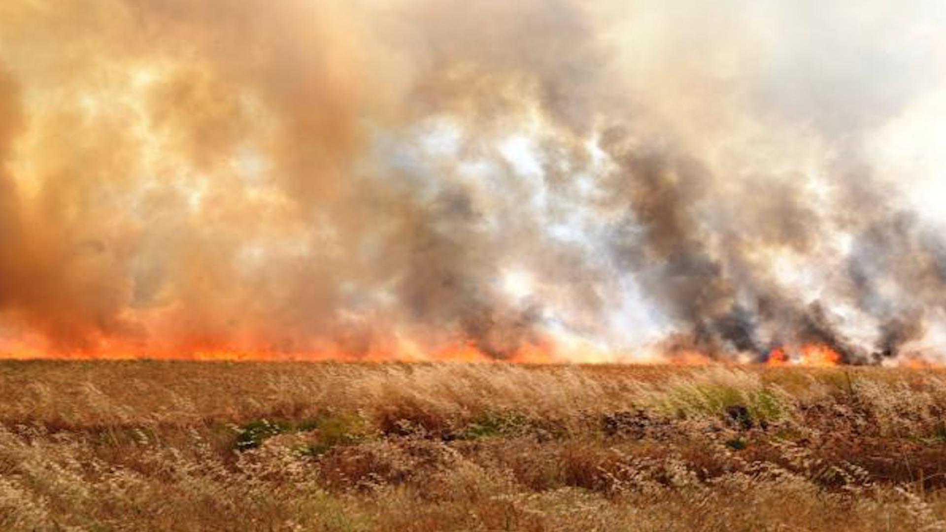 Photo of خطوات ملموسة لهيئة الاقتصاد والزراعة لتعويض متضرري الحرائق