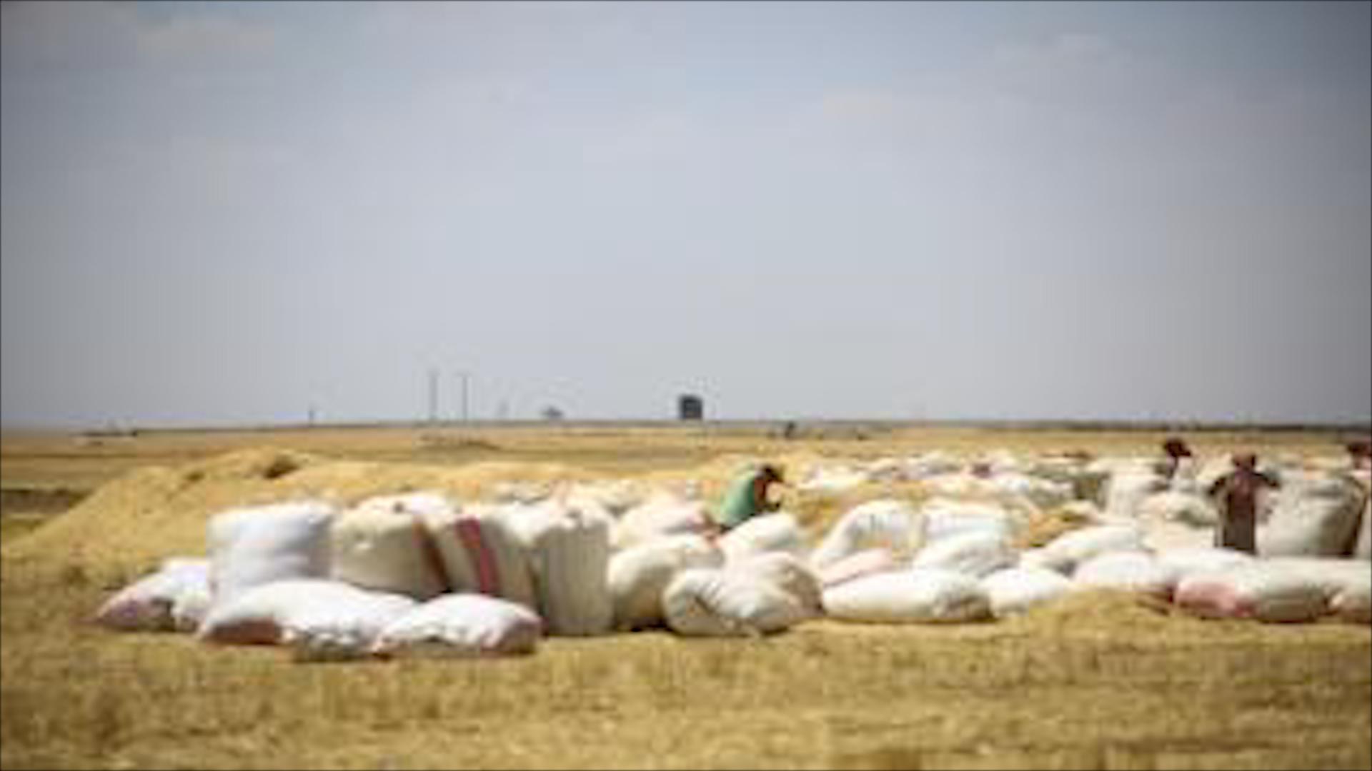 صورة الاحتلال التركي يمنع مزارعي تربه سبيه من زراعة وحصاد أرضهم