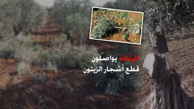 Photo of مرتزقة تركيا يواصلون قطع الأشجار وبيع حطبها وسرقة وتخريب المواقع الأثرية
