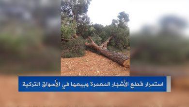 صورة عفرين..استمرار قطع الأشجار المعمرة وبيعها في الأسواق التركية