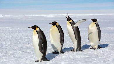 Photo of العثور على 11 مستعمرة جديدة للبطريق في القارة القطبية الجنوبية