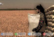 Photo of جنود النظام التركي ومرتزقته يسرقون مخزون القمح من كري سبي / تل أبيض