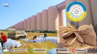 صورة هيئة الزراعة توفر بذار القمح للمزارعين بقيمة مؤجلة