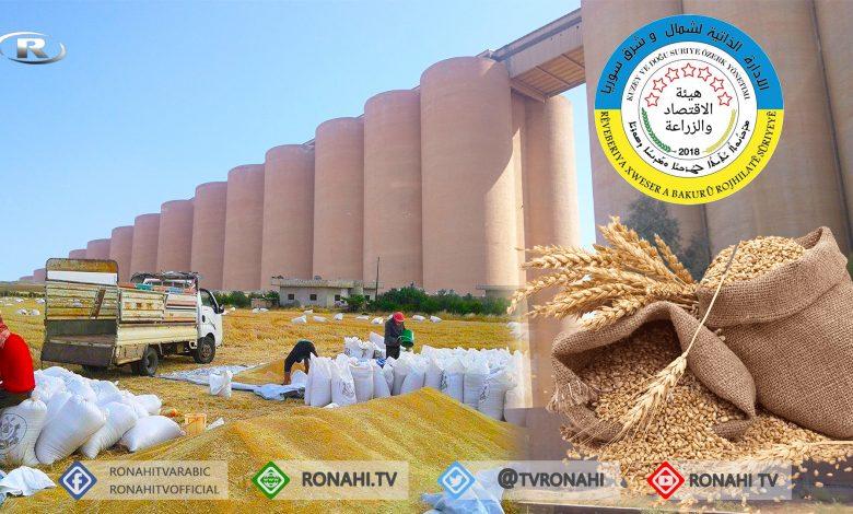 Photo of هيئة الزراعة توفر بذار القمح للمزارعين بقيمة مؤجلة