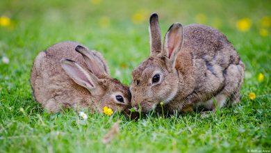 صورة أكثر من 30 نوعا من الثدييات مهددة بالانقراض