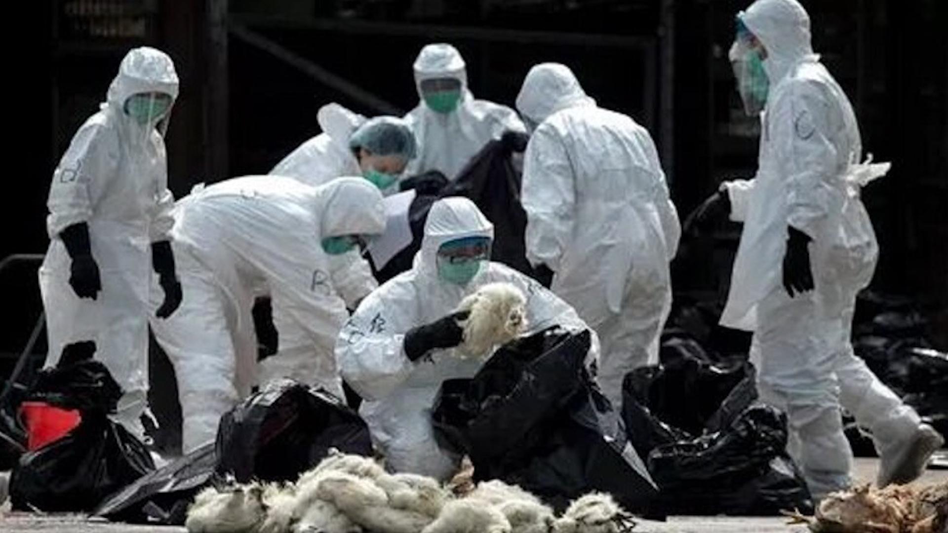 Photo of Li Çînê heta niha ji ber virusa korona 9 kesan jiyana xwe ji dest daye