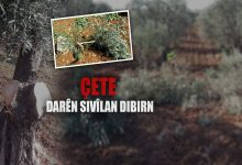 Photo of Çeteyan 100 darên Efrînê birîn û 6 dikan desteserkirin