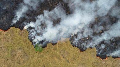 Photo of Bîlançoya şewata daristanan li Amazonê ya 2020 ji ya 2019'an zêdetir bûye
