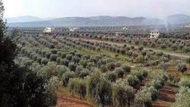 Photo of Çete kolandina cihên şûnwaran yên kantona Efrînê didomînin