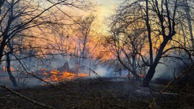 Photo of Şewata daristanên Chernobyl asta tîrêjandinê 16 qat zêde bûye