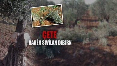 Photo of Çeteyan, 70 darên zeytûnê li Cindirêsê ya Efrînê birîn