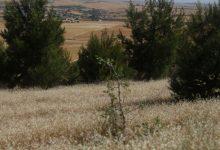 Photo of Li Kobanê, dar û daristan ji şewatan tên parastin