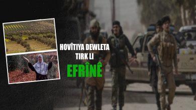 Photo of Çete li gundê Qirigolê yê Efrînê, darên zeytûnê desteser dikin
